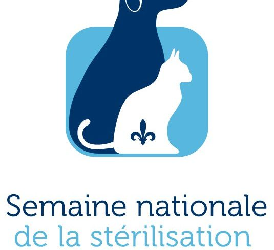 La SPA le MCE invientent les différents acteurs de Québec à participer à la semaine nationale de stérilisation animale au Québec
